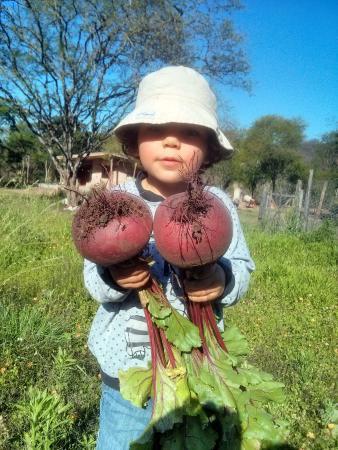 Palma Sola, Argentine: Harvest your fresh veggies