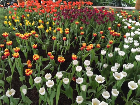 Rosales jardín botánico de Bogotá - Picture of Jardin Botanico de ...