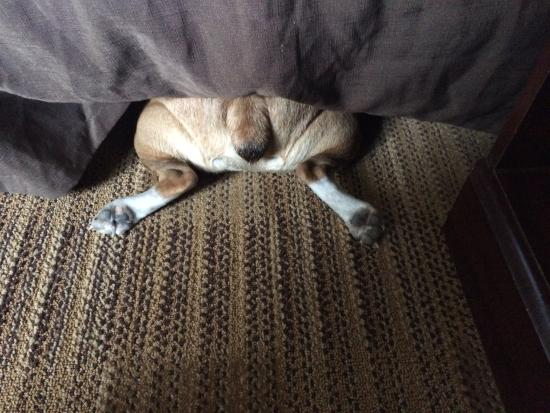Extended Stay America - Des Moines - Urbandale: Checking under the bed.