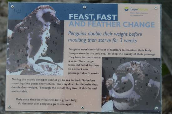 Betty's Bay, Republika Południowej Afryki: sign