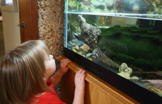 Runge Conservation Nature Center: A chance to look inside the Alligator snapper's mouth.