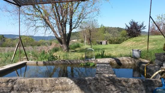 Jardin Bassin Avec Des Poissons Photo De Le Mas En
