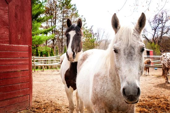 Healing With Horses at Wildrose Horse Farm: Indy and Renagade