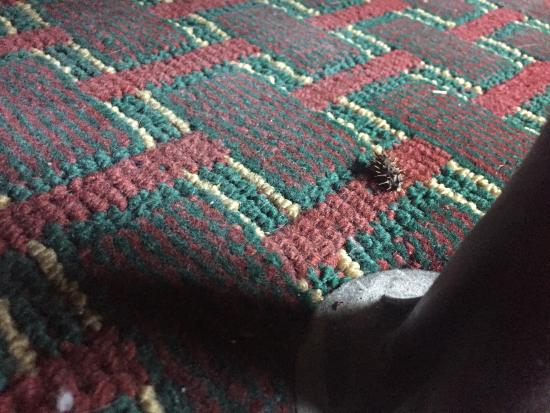 Motel 6 Sedalia: photo7.jpg