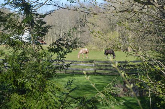 写真Pheasant Run Farm枚