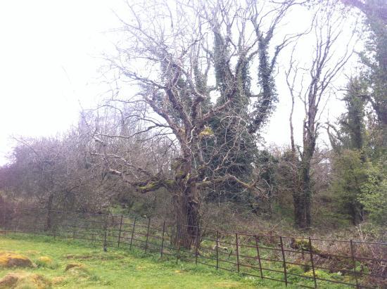 Boa Island, UK: Trees around