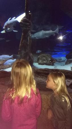 Riverhead, NY: Aquarium
