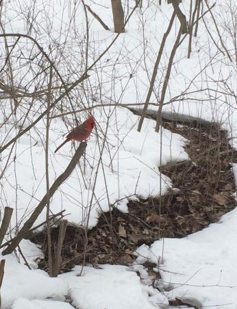 Lemoine Point Conservation Area: A shy cardinal. Did not eat from my hand but happily ate peanuts only a few feet away.