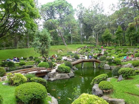 La planta que le da nombre al lugar colomo picture of for Plantas para jardin japones
