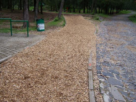 Bosque Colomos : Pista de correr