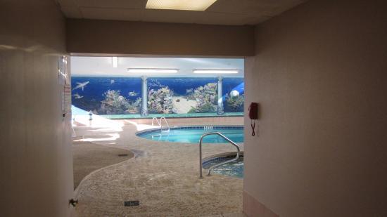 Bellville, Огайо: Pool