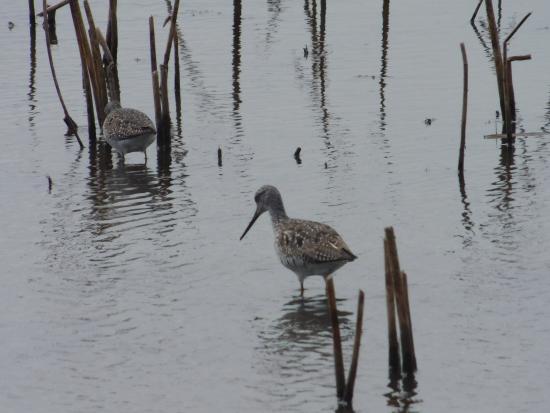 Seneca Falls, Нью-Йорк: some of the birds