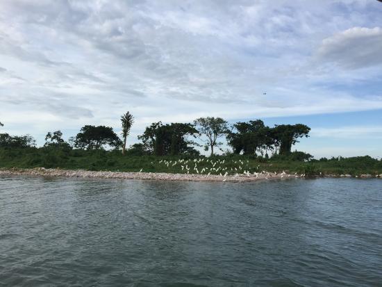 Rubondo Island, Tanzania: photo4.jpg