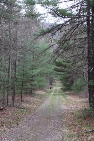 Fayetteville, Pensilvania: Trail into Dead Womans Hollow