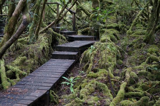 Strathgordon, Austrália: Some steps and ducking under low branches