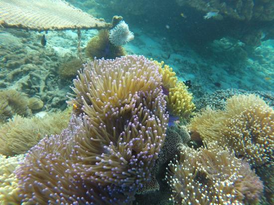 Лампунг, Индонезия: pemandangan bawah laut