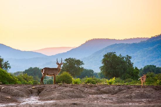 Wildlife Photography - Water Buck, Lower Zambezi National ...