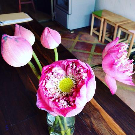 Pretttttttyyyyy Love Lotus Flowers Xx Picture Of Big Board Kitchen