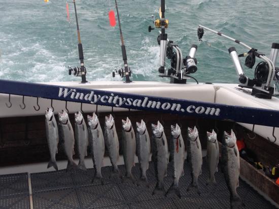 WindyCitySalmon: coho salmon