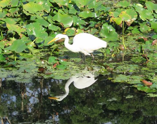 Вуллонгонг, Австралия: In duck pond