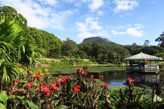 Вуллонгонг, Австралия: Duck pond