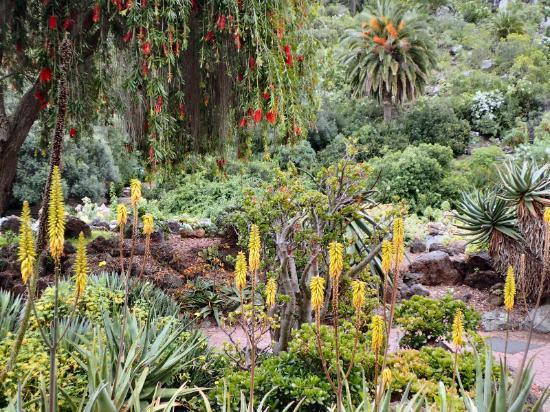 Jardin canario fotograf a de jard n bot nico canario las for Jardin canario
