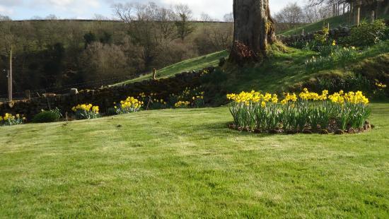 Broomshaw Hill Farm: Spring colour
