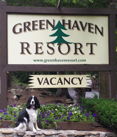 Green Haven Resort: Dog-friendly accommodations