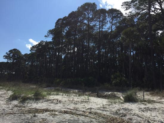 Hunting Island State Park: photo4.jpg