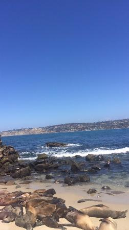 Homewood Suites by Hilton San Diego-Del Mar: Sea Lions on La Jolla Beach