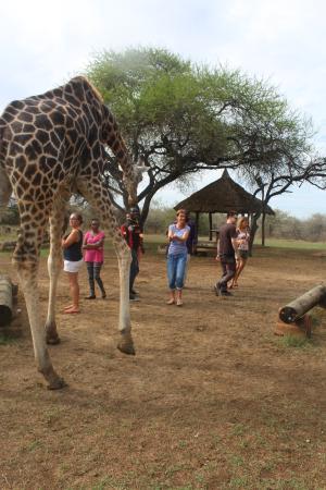 Nguuni Nature Sanctuary: feeding