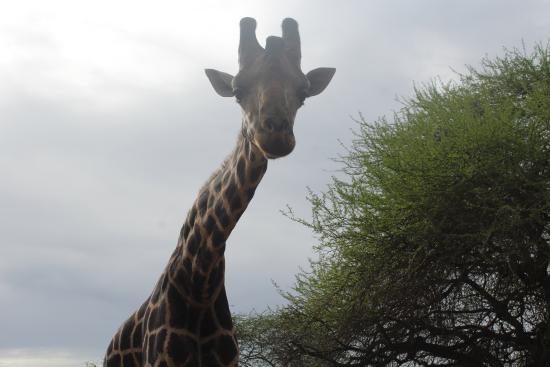 Nguuni Nature Sanctuary: curious