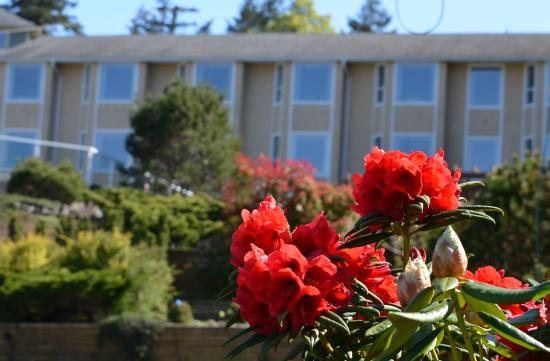 Whiskey Point Resort: Spring Rhododendrons at Whiskey Point
