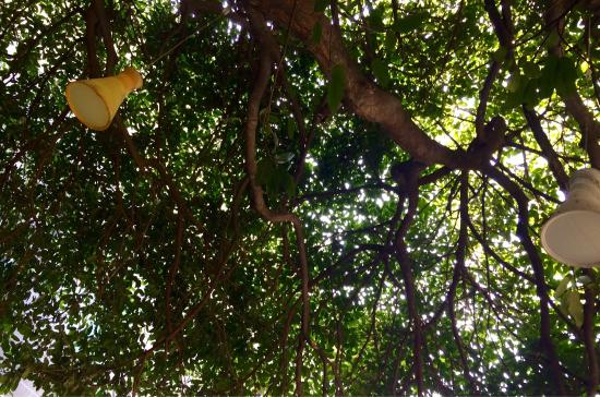 Santa Ana, Costa Rica: photo1.jpg