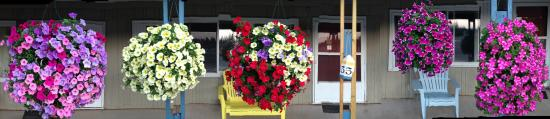 Washburn, WI: Outside flowers