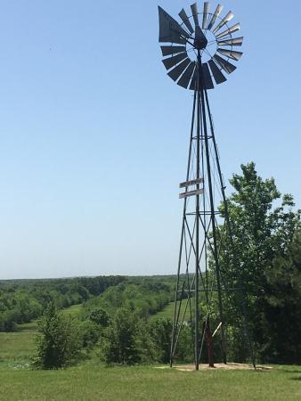 Mineola, TX: photo6.jpg