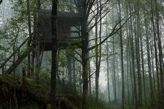 Odeshog, Suecia: little treehouse in the mist