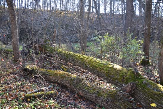 Mount Morris, IL: Sleepy Hollow Trail