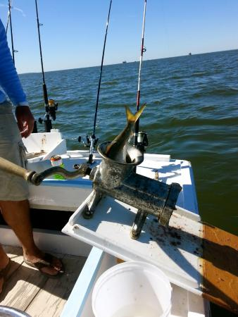 Pelican catch charters annapolis md top tips before for Annapolis fishing charters
