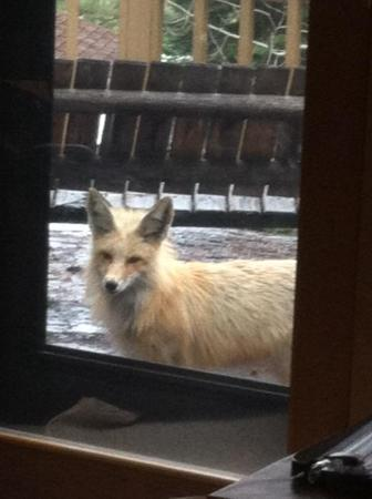 McCall, ID: This spring we were visited by this curious fellow.