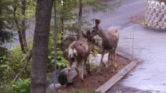 McCall, ID: These ladies came to peruse the snacking possibilities in the front yard last spring.