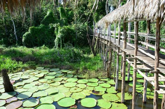 Amazon Jungle Palace: Visita ao Lago da Vitória Régia