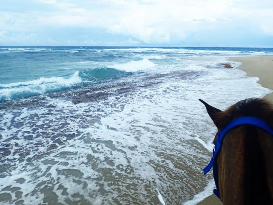 Cabarete, Republik Dominika: the horses love the ocean