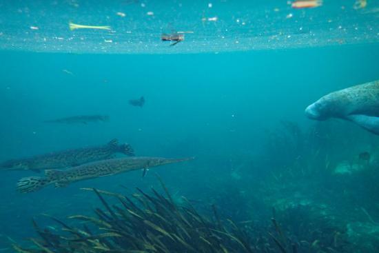 Fort White, Флорида: Wildlife in the Ichetucknee River