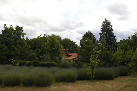 Huala Hostel : nuestro parque