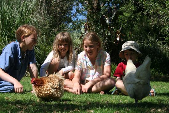 Pukenui, Новая Зеландия: Farmyard animals