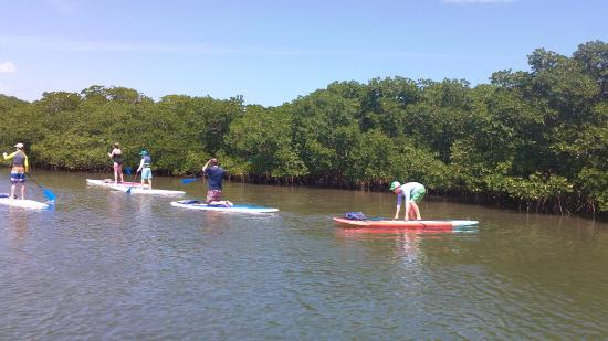 Tavernier, FL: SUP in the mangroves.