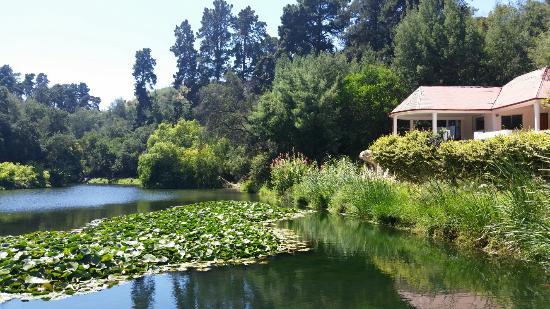 20160218 131027 picture of jardin botanico for Jardin botanico vina