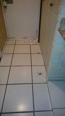 Portogalo Suite Hotel: Aranha no quarto
