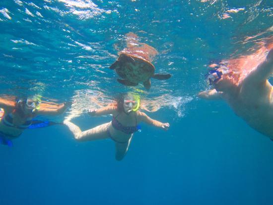 Half-Day West Maui Snorkel